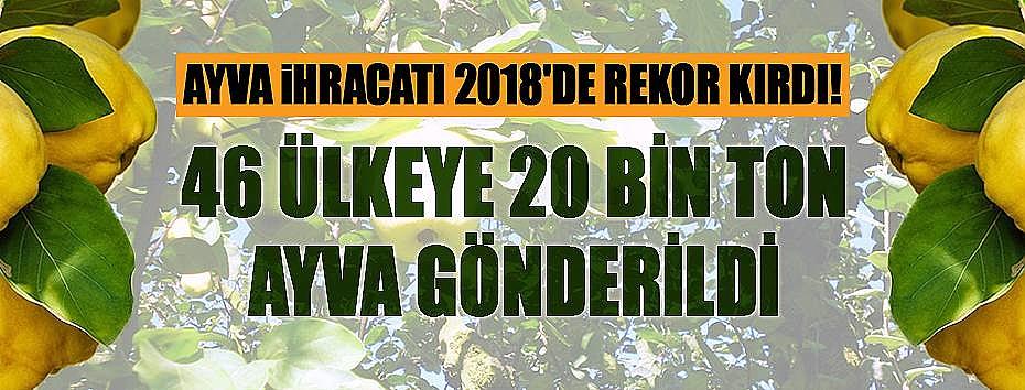 Ayva İhracatı 2018'de Rekor Kırdı!